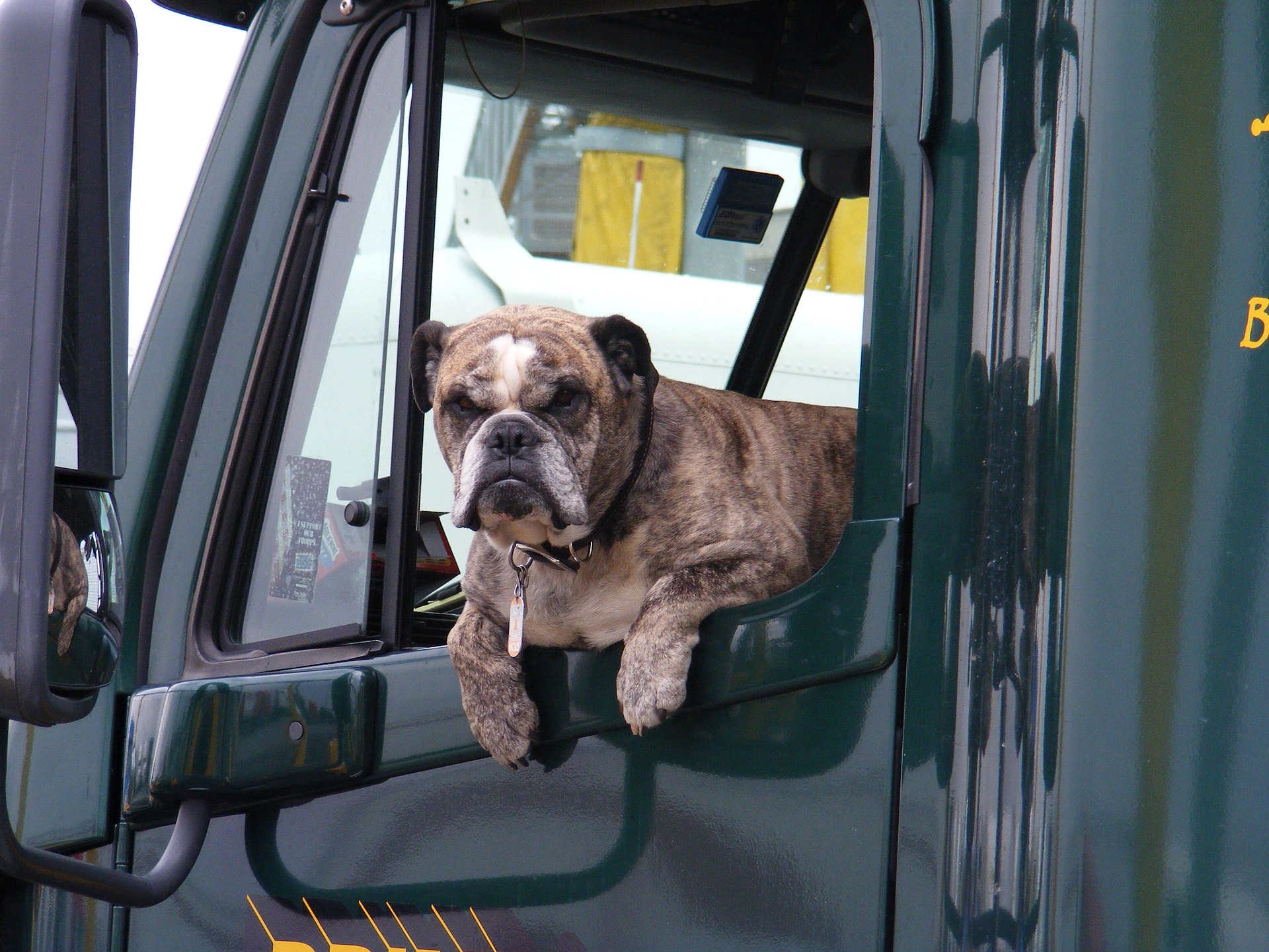 dog in the truck